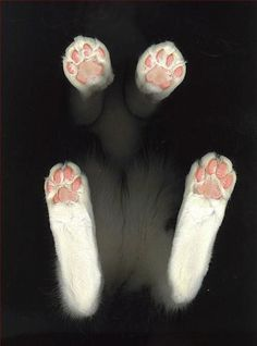 love kitty paws!!!!!!!!!!!!!!!!!!!!!!!!!!!!!
