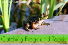 catching frogs and toads