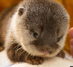 What's cuter than a baby otter? Nothing.