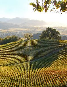 Rolling hills of Napa Valley