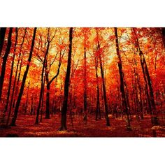 The many beautiful colors of maple trees.