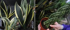 6 Easy-Care Houseplants That are Sure to Thrive
