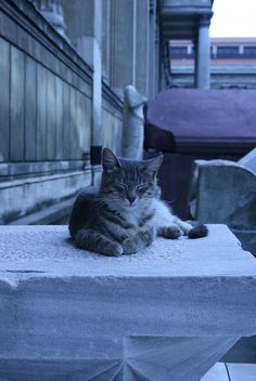 Museum of Antiquities Cat, Istanbul, Turkey by remittancegirl, via Flickr