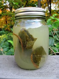 canning grape leaves