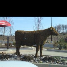 Moooo  Chick fil-a near J's Daycare