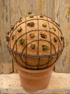 Succulents planter... 2 metal baskets with coco liners.... fill with soil & wire together in middle.... plant succulents
