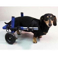 Mini Dog Wheelchair - Blue and Pink