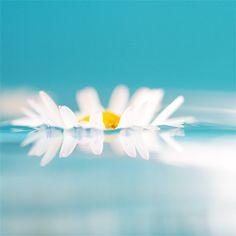 Pretty floating daisy :)