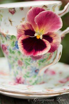 . tea time, sons, teas, roses, gardens, pansies, tea cup, teacups, flower