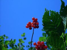 Elderberries, walnuts and more: What's in season for foraging in September