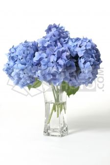 Hydrangeas!  They're like child-size bouquets of delicate little flowers.