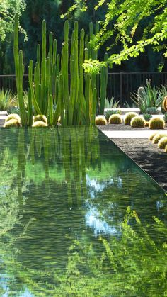reflecting pond with cactus