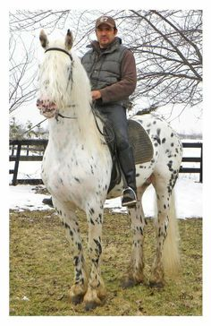 """Mystic Warrior"" at 5 years old he is now leopard appaloosa colored, mostly white. A striking stallion and apparently talented as well!"