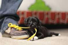 41 Puppies Discovering New Things On Their First Day Home.