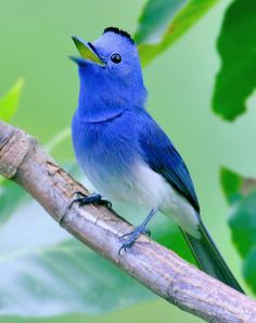 The Real Life 'Twitter' Bird