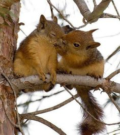 Cute animals with a whole lot of love