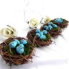 Bird Nests...Robin's Eggs Blue...