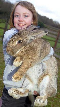 Flemish giant rabbit!