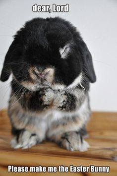 yes, please Lord, make him the easter bunny ! Cute!