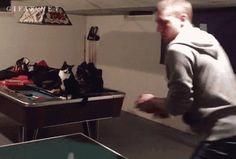 Cat Fist-Bump Approval