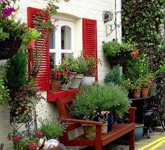 plant, red shutter, bench, cottage gardens, windows, cottages, shutters, container gardening, window boxes