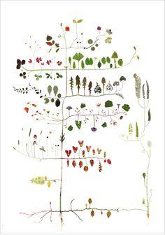 leaves. stems. plants. art. nature.   RP » Tree