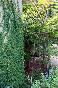 Creeping Fig Vine - Southern Lagniappe