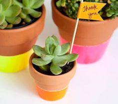 Painted potted plants as party favors