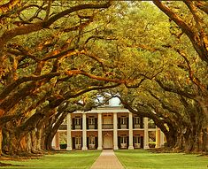 Oak Alley Plantation, Louisiana. I have always wanted to go here and walk down the tree lined driveway like I'm in a movie :)