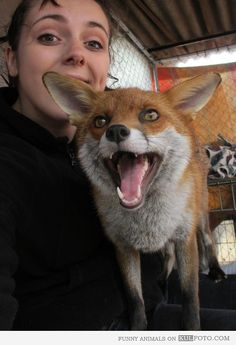 Tame fox happy face! I want I want !!!