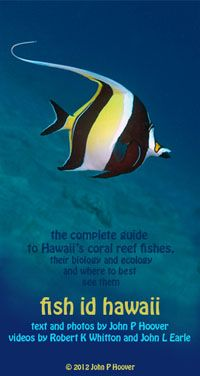 """HAWAIʻI FISH ID AP FOR iPAD — The """"Fish ID Hawaii pro"""" iPad app can identify 324 Hawaiian reef fish by color, shape, family group, scientific name and Hawaiian name. It includes 987 underwater photos and more than 300 underwater videos. It lets you choose from 23 dive/snorkel sites. Links to Fishbase for additional info on each fish."""