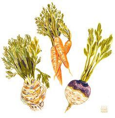 Because of the lack of real updates, here are some root vegetables I had to draw for uni.