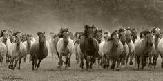 wild by Marion Vollborn on 500px