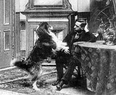 "In 1905, Blair was the first canine movie star and was featured in ""Rescued by Rover"". Blair was a Collie owned by the movie's director and an actor in the movie, Cecil Hepworth. It was a British film where a baby is kidnapped by an old beggar woman, but the faithful family dog Rover comes to its rescue. The name Rover, uncommon until then, became popular."