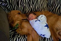 dog babi, anim, dogs, golden retrievers, pet, baby puppies, babi kid, babi photo, thing