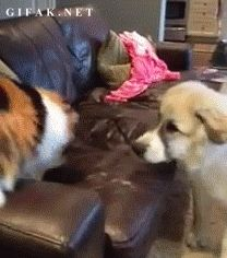 This dog who decided he'd just ask the cat a quick question. | 28 Dogs That Immediately Regret Their Decisions