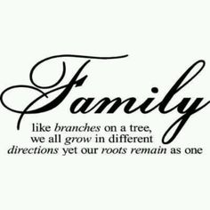 Pinterest Quotes About Family   family quotes, sayings, like branches on a tree   Favimages.net