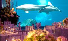 aquarium wedding #aquarium #wedding