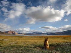 """Marmotta Fotografia di Sebastian Wahlhuetter , National Geographic Your Shot  """"Questa foto è stata scattata nel Ladakh, in India, a un'altitudine di 4.500 metri sull lago Tso Kar, un dei laghi più alti di acqua salata sulla Terra"""""""