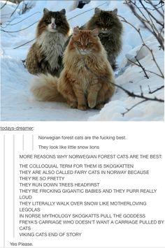 Fairy cats!!!