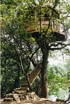 Sting's treehouse designed and built by Roderick Romero -