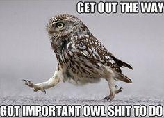 Keep owling…