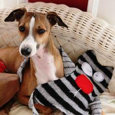 11 Cool DIY Dog Toys | Shelterness