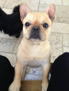 "Hockey player Liam Stewart @ LiamStewart11 tweeted this photo of his dog:  ""Cutest ever? #Stanley"""