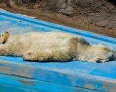 Help ARTURO - He MUST have an independent medical evaluation NOW  please SIGN!