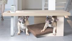 coffee tables, anim, dogs, pets, pet beds, dog beds, furniture, coffe tabl, design