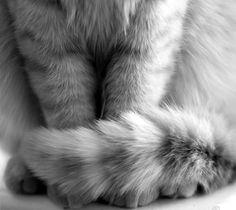 kitty cats, kitten, anim, meow, orange cats, cat peopl, ador, ginger cats, kitti friend