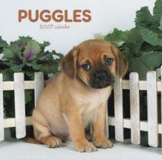 puggles