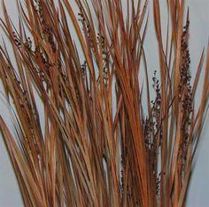 Dried Wild Grass