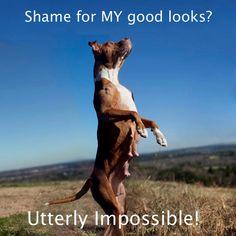 Adoptable Fridays - Khayla via Dog Shaming